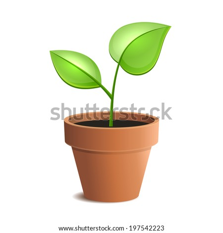 Young Green Plant in Pot Isolated on the White Backgrounds. Vector illustration - stock vector