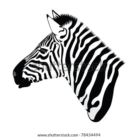 Zebra head Stock Photos  Illustrations  and Vector ArtZebra Head Coloring Pages