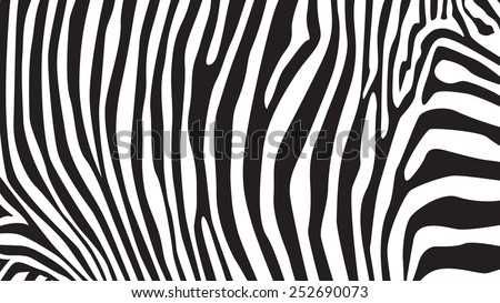 Zebra stripes pattern, illustration - stock vector