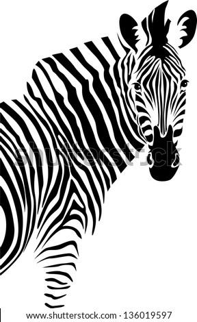 Zebra. Vector. - stock vector