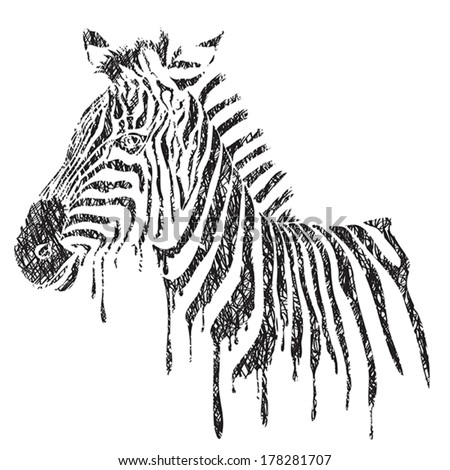 Zebra - vector black and white illustration, sketch - stock vector